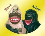 обезьяны1