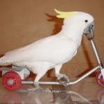 попугай-300x227